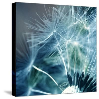 New Beginning I--Stretched Canvas Print
