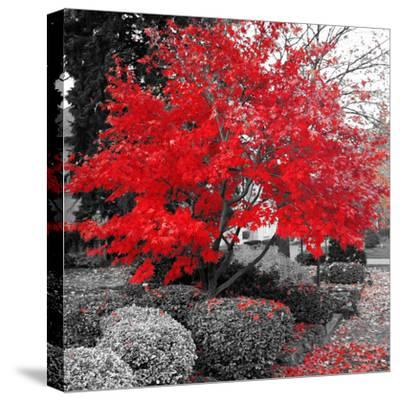Studies in Red 4--Stretched Canvas Print