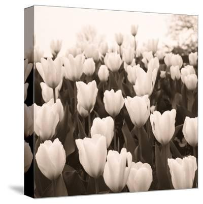 Tulips I--Stretched Canvas Print