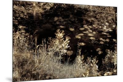 Infrared Pond 4-Jean-Fran?ois Dupuis-Mounted Art Print