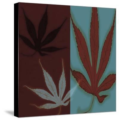 Maple-Jane Ann Butler-Stretched Canvas Print