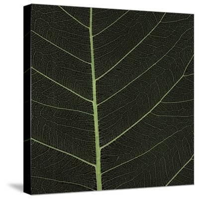 Bo Leaf I-Andrew Levine-Stretched Canvas Print
