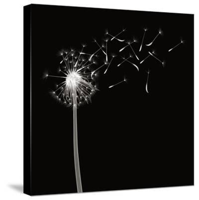 Into the Night II-Jim Wehtje-Stretched Canvas Print