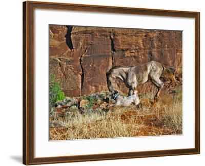 Running Horses I-David Drost-Framed Giclee Print
