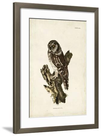 Tengmalm's Owl-John Selby-Framed Giclee Print
