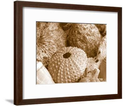 Sea Urchins--Framed Art Print