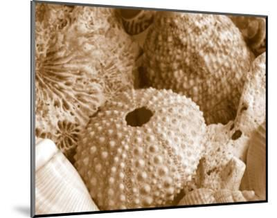 Sea Urchins--Mounted Art Print
