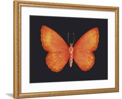 Summer Butterfly V-Sophie Golaz-Framed Giclee Print