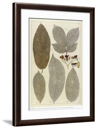 Botanical Deciduous Leaves III-Pieter Tanje-Framed Giclee Print
