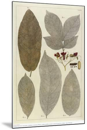 Botanical Deciduous Leaves III-Pieter Tanje-Mounted Giclee Print