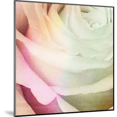 Macro Rose-Kristin Emery-Mounted Art Print