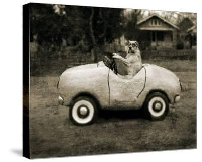 Ollie In His Car-Pete Kelly-Stretched Canvas Print