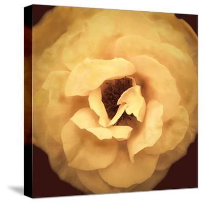 Amber Rose-Katja Marzahn-Stretched Canvas Print