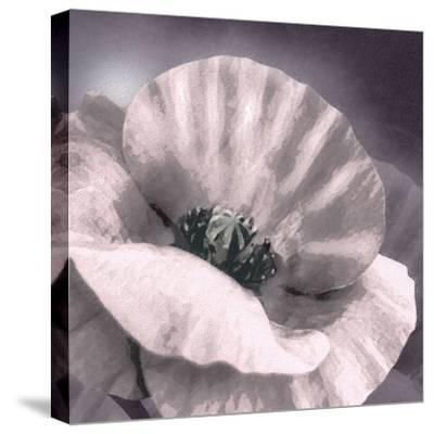 Poppy Dusk I-Lucy Meadows-Stretched Canvas Print
