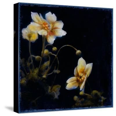 Midsummer Night Bloom III-Douglas-Stretched Canvas Print