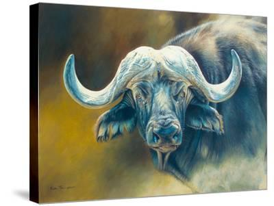 Warrior - African Cape Buffalo-Kim Thompson-Stretched Canvas Print