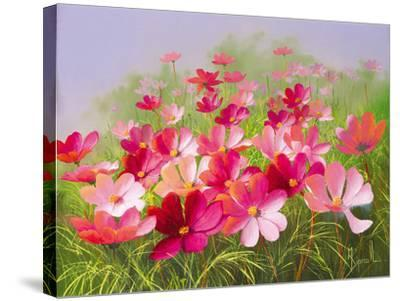 In The Pink-Mary Dipnall-Stretched Canvas Print