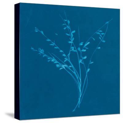 Wisp I-Sarah Cheyne-Stretched Canvas Print