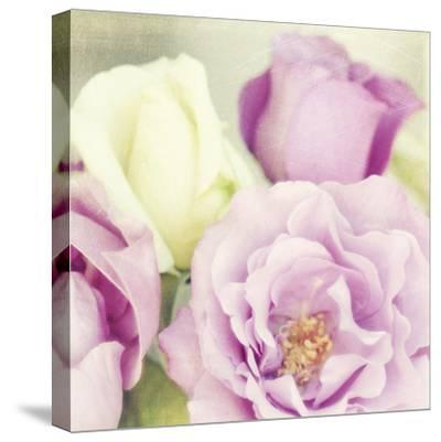 Bouquet II-Shana Rae-Stretched Canvas Print