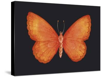 Summer Butterfly V-Sophie Golaz-Stretched Canvas Print