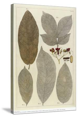Botanical Deciduous Leaves III-Pieter Tanje-Stretched Canvas Print