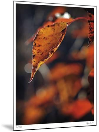 Fall Flames-Michelle Wermuth-Mounted Giclee Print