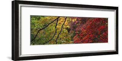 Maple Glade X-Bill Philip-Framed Giclee Print