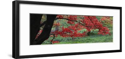 Maple Glade XI-Bill Philip-Framed Giclee Print