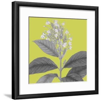 Botaniska V-Maria Mendez-Framed Giclee Print
