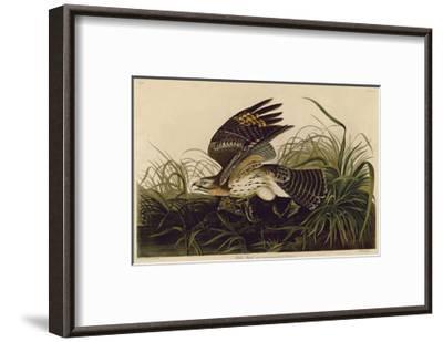 Winter Hawk-John James Audubon-Framed Giclee Print