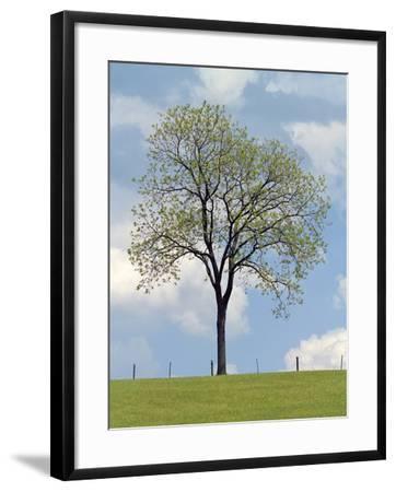 Tree Seasons I-Bill Coleman-Framed Giclee Print