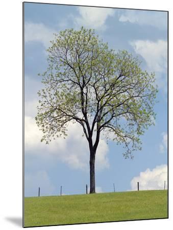 Tree Seasons I-Bill Coleman-Mounted Giclee Print