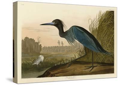 Blue Crane or Heron-John James Audubon-Stretched Canvas Print