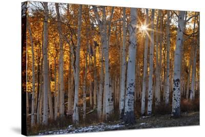 Burning October-Michael Greene-Stretched Canvas Print