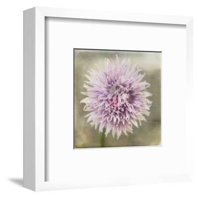 Waiting on Purple XII-Jennifer Jorgensen-Framed Art Print