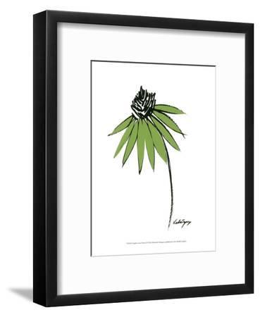 Graphic Cone Flower I-Deborah Velasquez-Framed Art Print