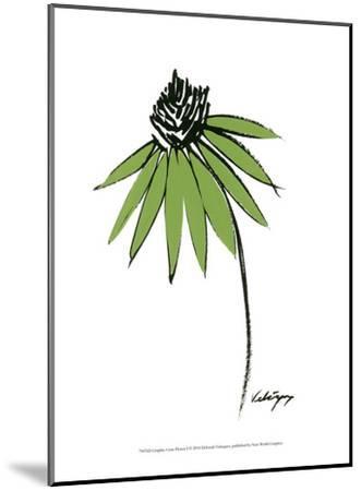 Graphic Cone Flower I-Deborah Velasquez-Mounted Art Print