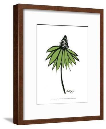 Graphic Cone Flower II-Deborah Velasquez-Framed Art Print