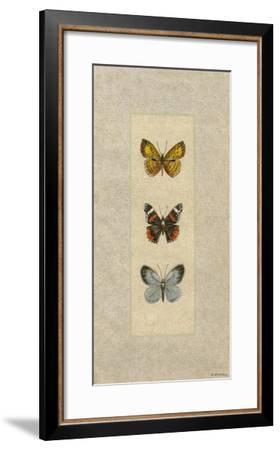 Butterfly Trio II-Wendy Russell-Framed Giclee Print