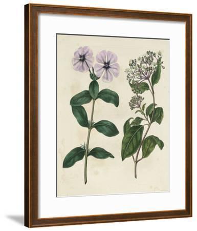 Garden Pairings VIII-Sydenham Edwards-Framed Giclee Print