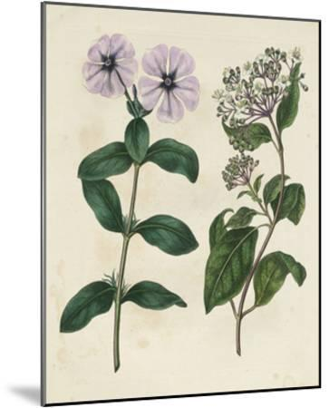 Garden Pairings VIII-Sydenham Edwards-Mounted Giclee Print