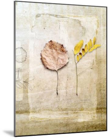 Herbarium II-Ingrid Blixt-Mounted Giclee Print