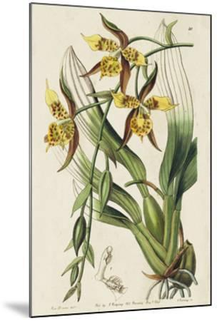 Spring Orchid I-Ridgeway-Mounted Giclee Print