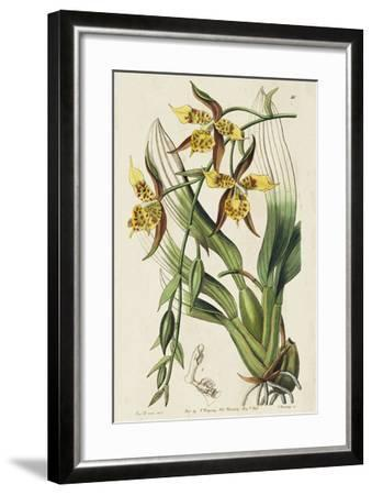 Spring Orchid I-Ridgeway-Framed Giclee Print