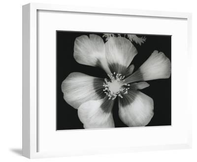 Big Blossom III-Albert Koetsier-Framed Art Print