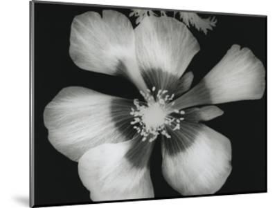 Big Blossom III-Albert Koetsier-Mounted Art Print