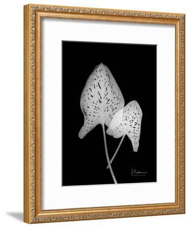 Calla Leaf X-Ray-Albert Koetsier-Framed Art Print