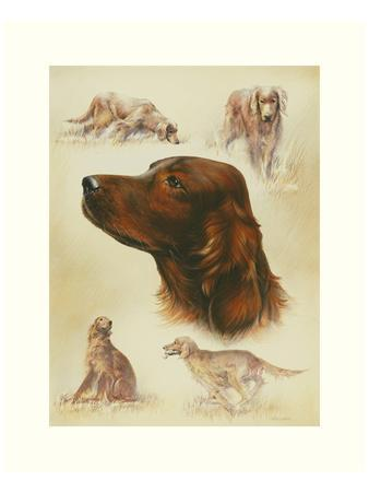 Irish Setter-Libero Patrignani-Art Print