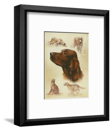Irish Setter-Libero Patrignani-Framed Art Print