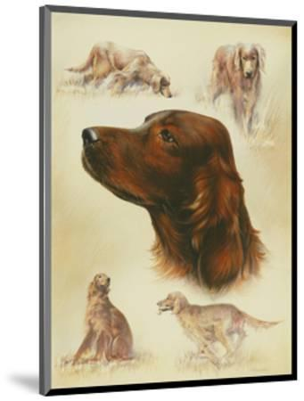 Irish Setter-Libero Patrignani-Mounted Art Print